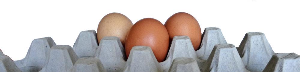 mikrowellen eierkocher huhn